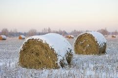 Mucchi di fieno sul campo congelato Fotografia Stock