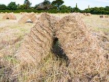 mucchi di fieno sul campo raccolto in Bretagna Immagine Stock