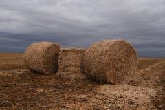 mucchi di fieno in un campo Fotografia Stock