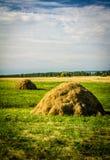 mucchi di fieno in un campo Immagini Stock Libere da Diritti