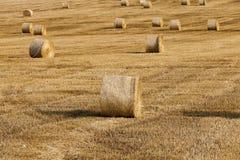 Mucchi di fieno in un campo di paglia Fotografie Stock