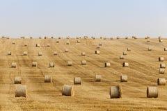 Mucchi di fieno in un campo di paglia Immagini Stock Libere da Diritti