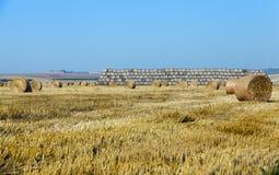 Mucchi di fieno in un campo di paglia Fotografia Stock Libera da Diritti