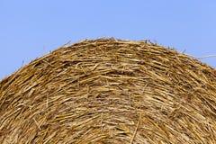 Mucchi di fieno in un campo di paglia Fotografia Stock