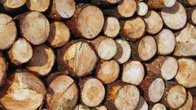 Mucchi di legname segato Fotografie Stock