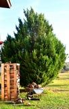 Mucchi di legno davanti ad un albero di abete nel giardino Carretto in pieno di legno fotografia stock