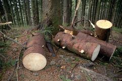Mucchi di legno in foresta Fotografia Stock Libera da Diritti