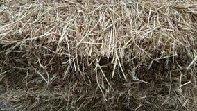 Mucchi di paglia, dettaglio di paglia accatastata per alimentazione animale Immagine Stock