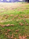 Mucchi di recente falciati dell'erba fotografia stock