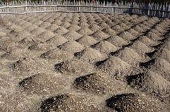 Mucchi a terra coltivati della terra di suolo Immagine Stock