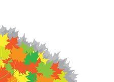 Mucchio dalle foglie di acero in un angolo Immagine Stock