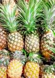 Mucchio degli ananas freschi fotografia stock libera da diritti