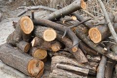 Mucchio dei ceppi abbattuti Trovandosi sulle banche del legno Fotografie Stock