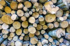 Mucchio dei ceppi di legno Fotografia Stock