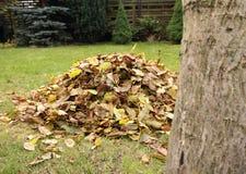 Mucchio dei fogli di autunno caduti Immagine Stock
