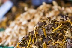 Mucchio dei funghi Fotografia Stock Libera da Diritti