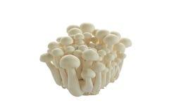 Mucchio dei funghi bianchi crudi del granchio Immagini Stock Libere da Diritti
