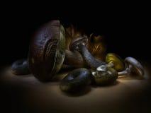 Mucchio dei funghi commestibili crudi Fotografie Stock Libere da Diritti