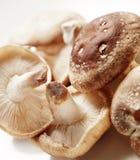 Mucchio dei funghi con ombra Immagine Stock Libera da Diritti