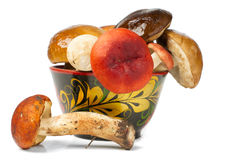 Mucchio dei funghi freschi Fotografie Stock