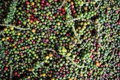 Mucchio dei granelli di pepe - nuova Mangalore, India immagine stock libera da diritti