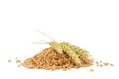 Mucchio dei granuli del frumento con le orecchie Immagine Stock