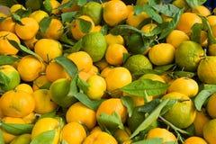 Mucchio dei mandarini Immagine Stock Libera da Diritti