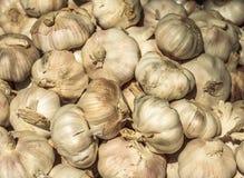 Mucchio dei molti aglio fresco nel mercato degli agricoltori da vendere dal campo per fondo Fine in su Fotografie Stock