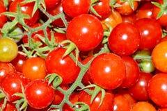 Mucchio dei pomodori Fotografia Stock Libera da Diritti