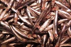 Mucchio dei sardinas su foodmarket Fotografie Stock