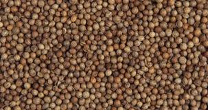 Mucchio dei semi di coriandolo stock footage