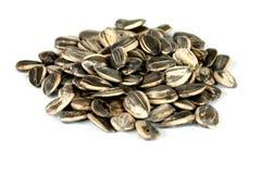 Mucchio dei semi di girasoli Immagini Stock