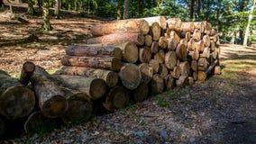 Mucchio dei tronchi del taglio tre fotografia stock