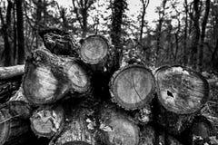Mucchio dei tronchi di legno Fotografia Stock