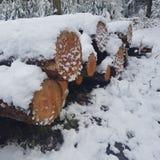 Mucchio del ceppo di Snowy Fotografia Stock