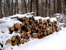 Mucchio del ceppo nel legno fotografia stock libera da diritti