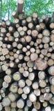 Mucchio del ceppo in una foresta fotografia stock libera da diritti