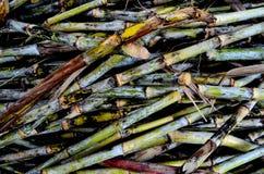 Mucchio del fondo della canna da zucchero di legno Fotografie Stock Libere da Diritti