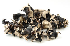 Mucchio del fungo del fungo secco fotografia stock libera da diritti