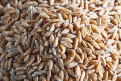 Mucchio del grano di Dinkel Immagine Stock