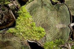 Mucchio del legname in una foresta Fotografia Stock