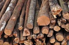 Mucchio del legno tagliato del fuoco fotografia stock libera da diritti