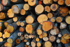 Mucchio del legno tagliato del fuoco Immagini Stock Libere da Diritti