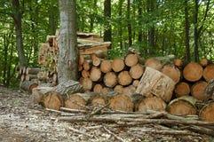 Mucchio del legno tagliato nella foresta Immagini Stock
