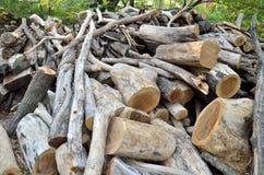 Mucchio del ramo di albero Fotografie Stock Libere da Diritti