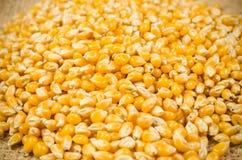 mucchio del seme secco del cereale sulla borsa del sacco Fotografie Stock Libere da Diritti