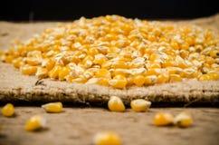 mucchio del seme secco del cereale sulla borsa del sacco Immagine Stock Libera da Diritti