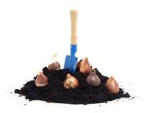 Mucchio del suolo nero del giardino con i bulbi e la pala Fotografia Stock
