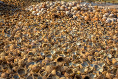 Mucchio del taglio e di intere noci di cocco Fotografia Stock Libera da Diritti