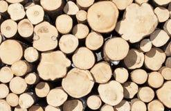 Mucchio dell'albero abbattuto Immagine Stock Libera da Diritti